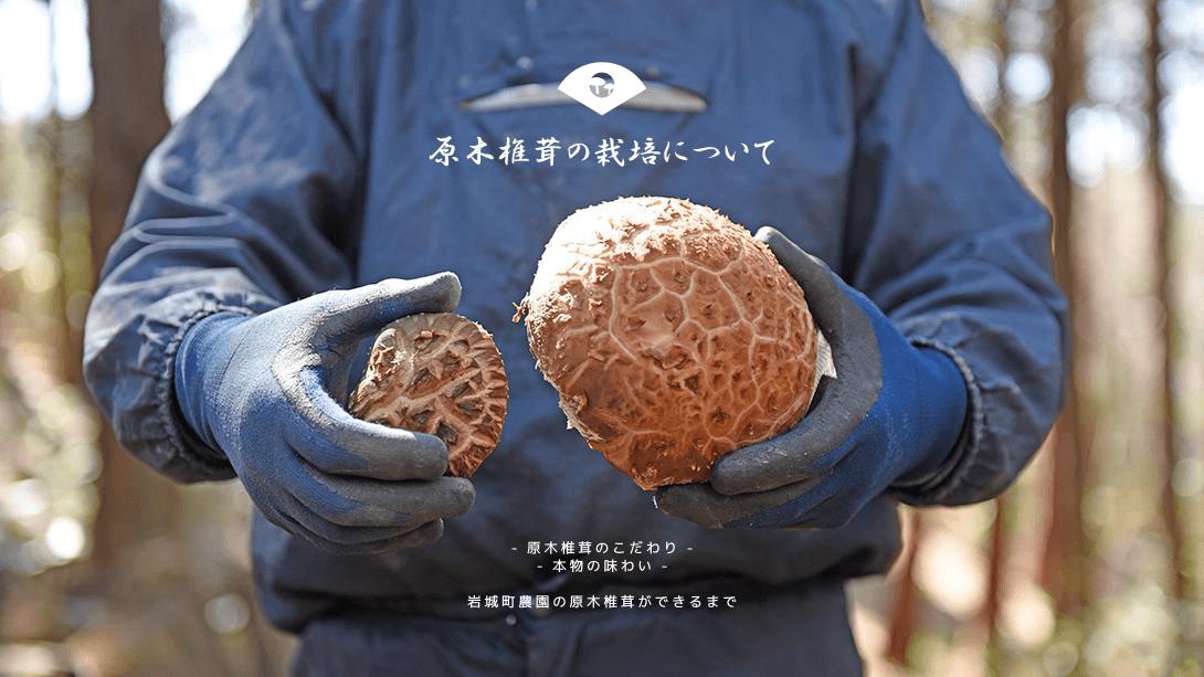 原木椎茸の栽培について